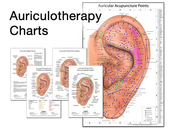 Auriculotherapy Charts